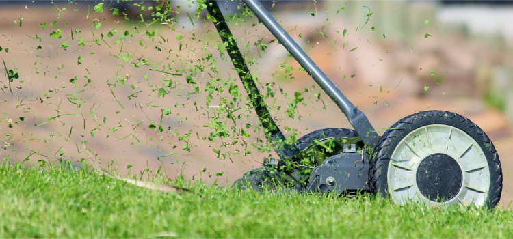 Should I Seed Or Sod My Lawn? - Soil Advocates Inc.