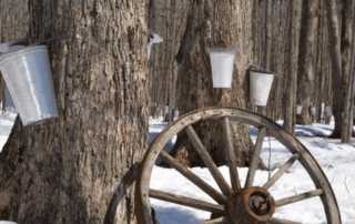 maple vs birch syrup