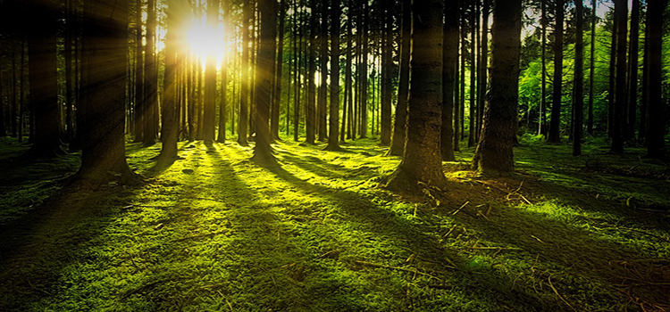 forests   forest experiences