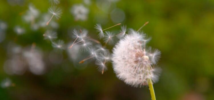 Top 5 Seed Dispersal Wonders - Soil Advocates Inc.
